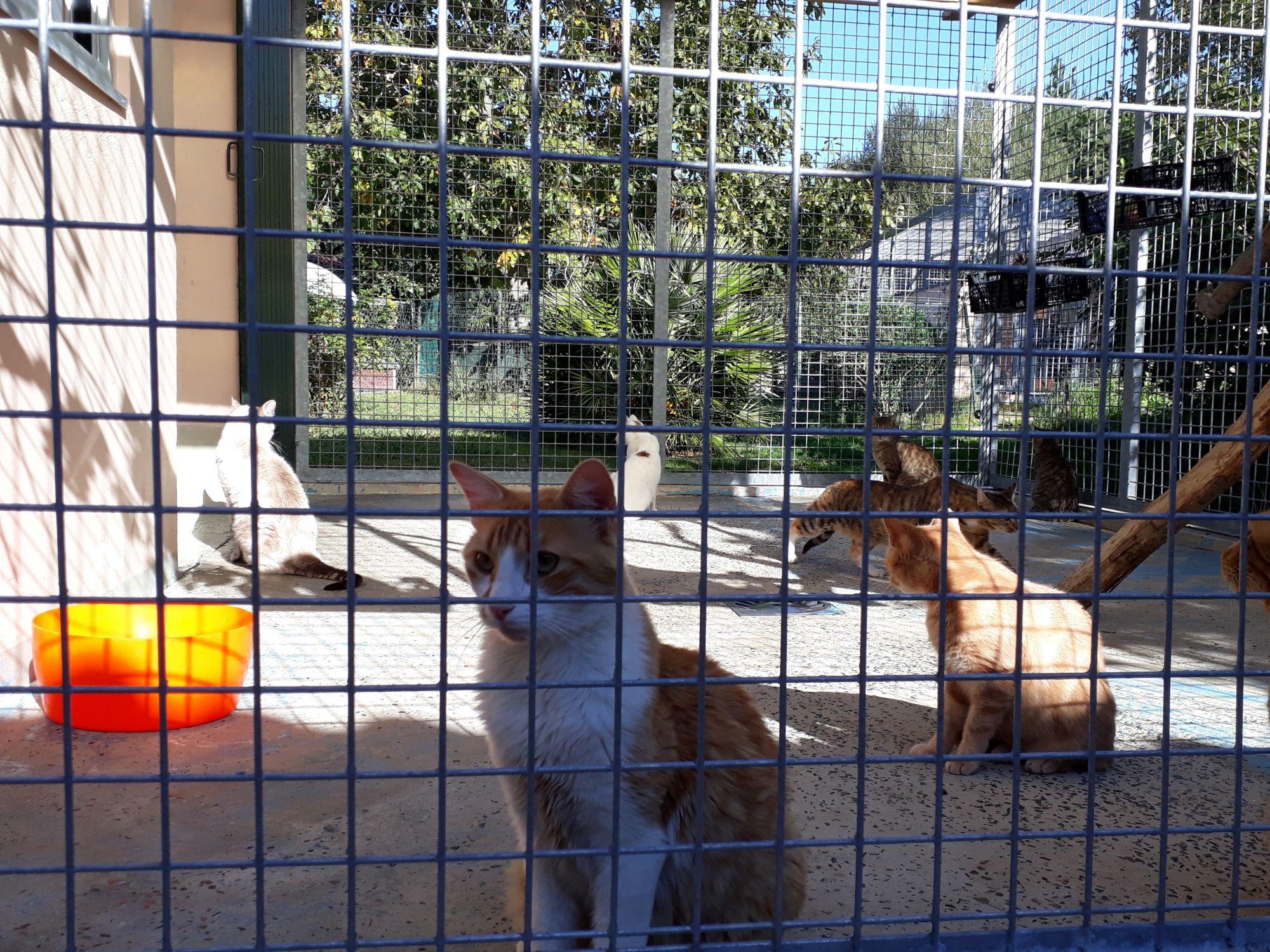 chats-dans-voliere-1