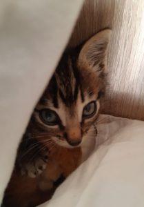 Un acte de protection: la stérilisation des chats